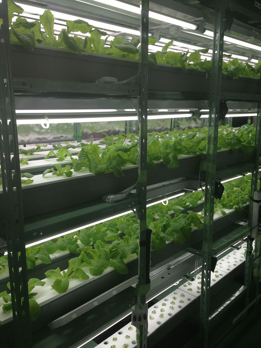 Orca Vision will implement OriginOil's EWS technology in a vertical farming pilot that will include both vegetable and algae production.