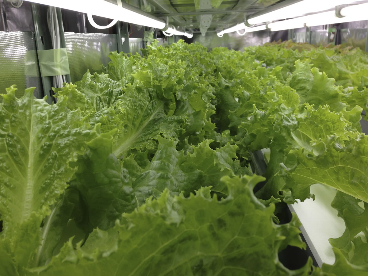 "Orca Vision's urban farms are designed to use hydroponics to deliver high quality and nutrient-rich fresh greens in a ""stacked"" or vertical configuration.  © OriginClear - Patents Pending"
