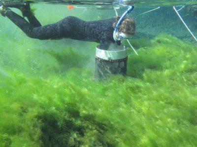 Alexander Springs Creek algae
