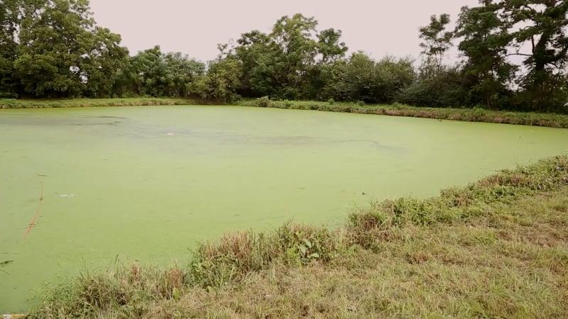Suntrace sewage lagoon