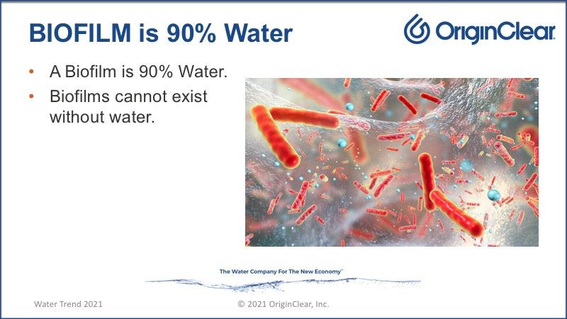 90% water