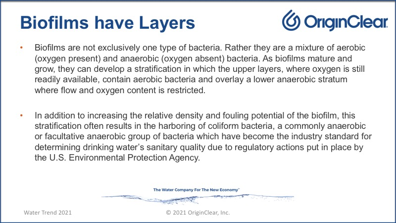 Biofilms have layers