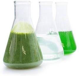 Electro Water Separation for Algae Harvesting